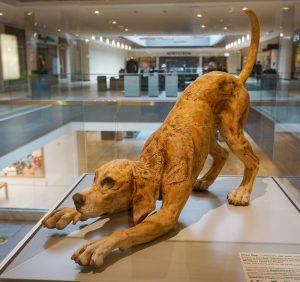 Down Dog by Beth Thompson